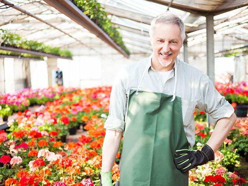praca holandia kwiaty